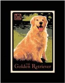 The Golden Retreiver