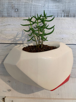 Large Wall Planter