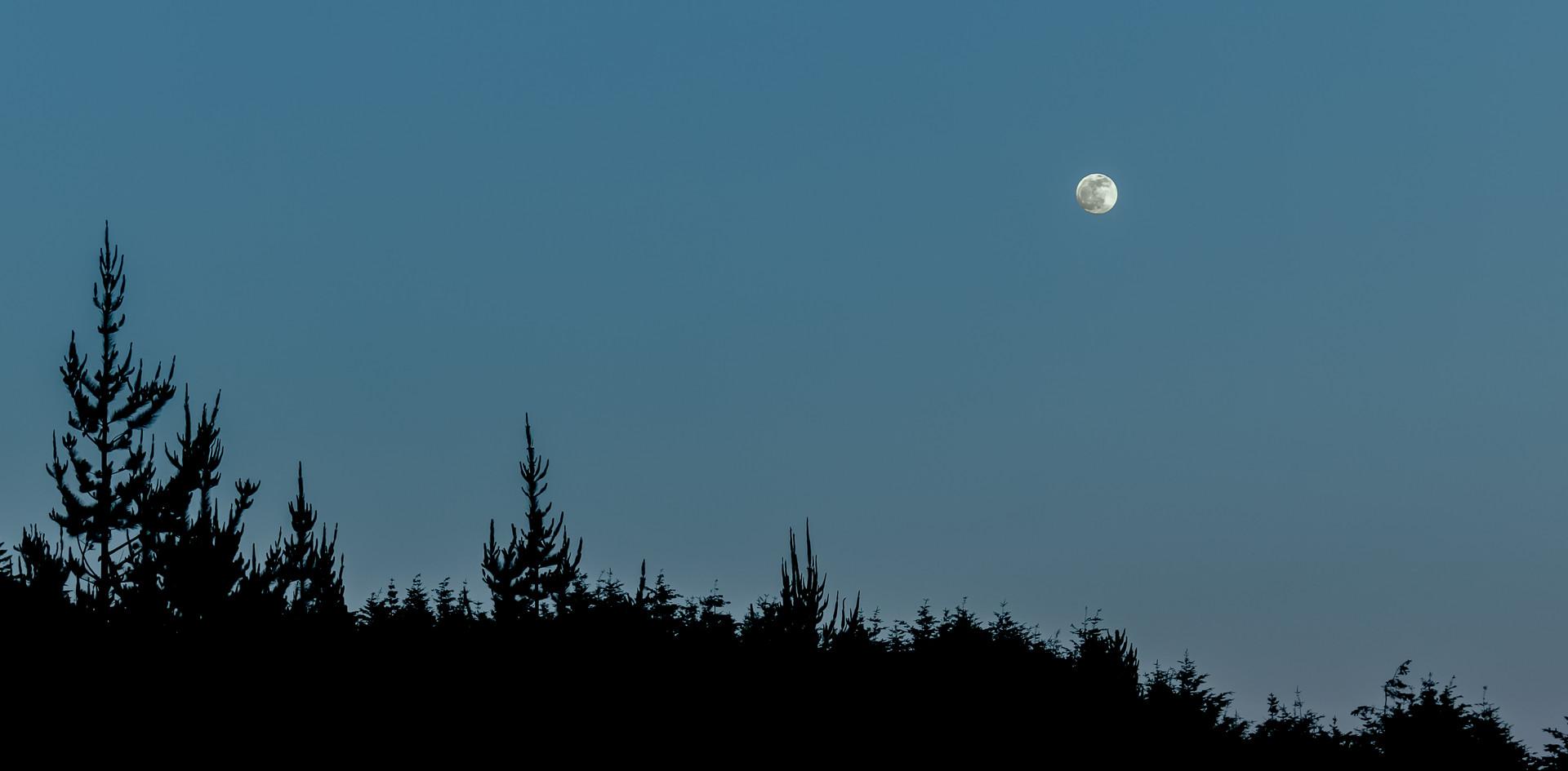 Full Moon and Dark Woods.jpg