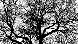 Winter Tree BW-1.jpg