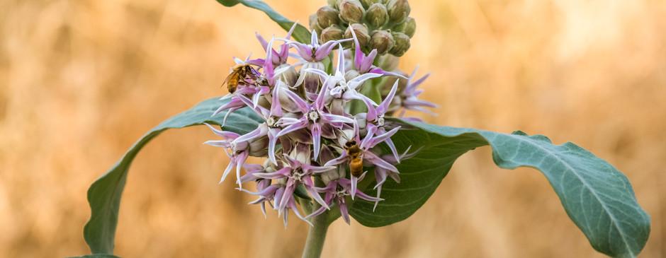 Bee and Bee-1.jpg