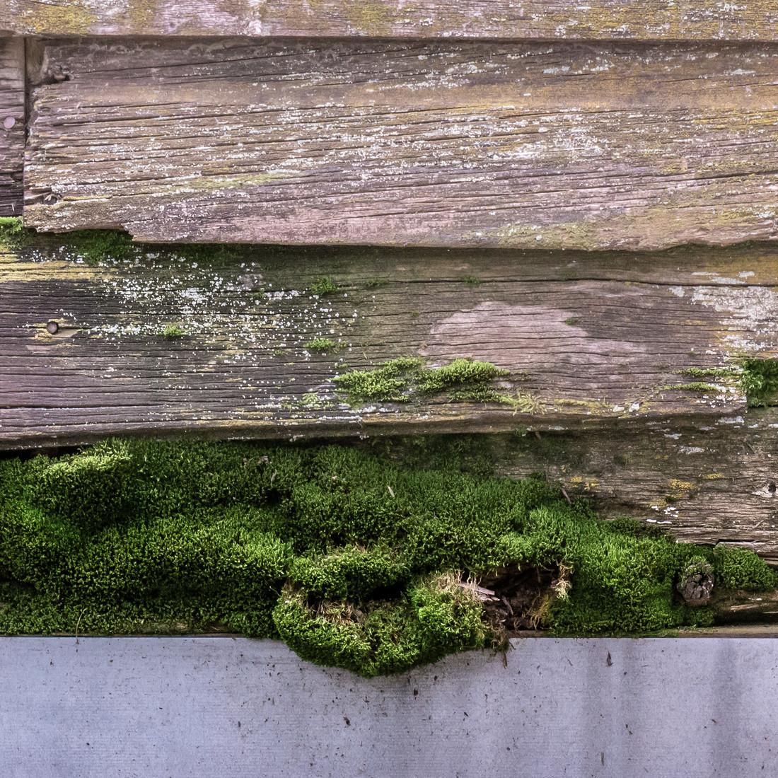 Mossy Bottom.jpg