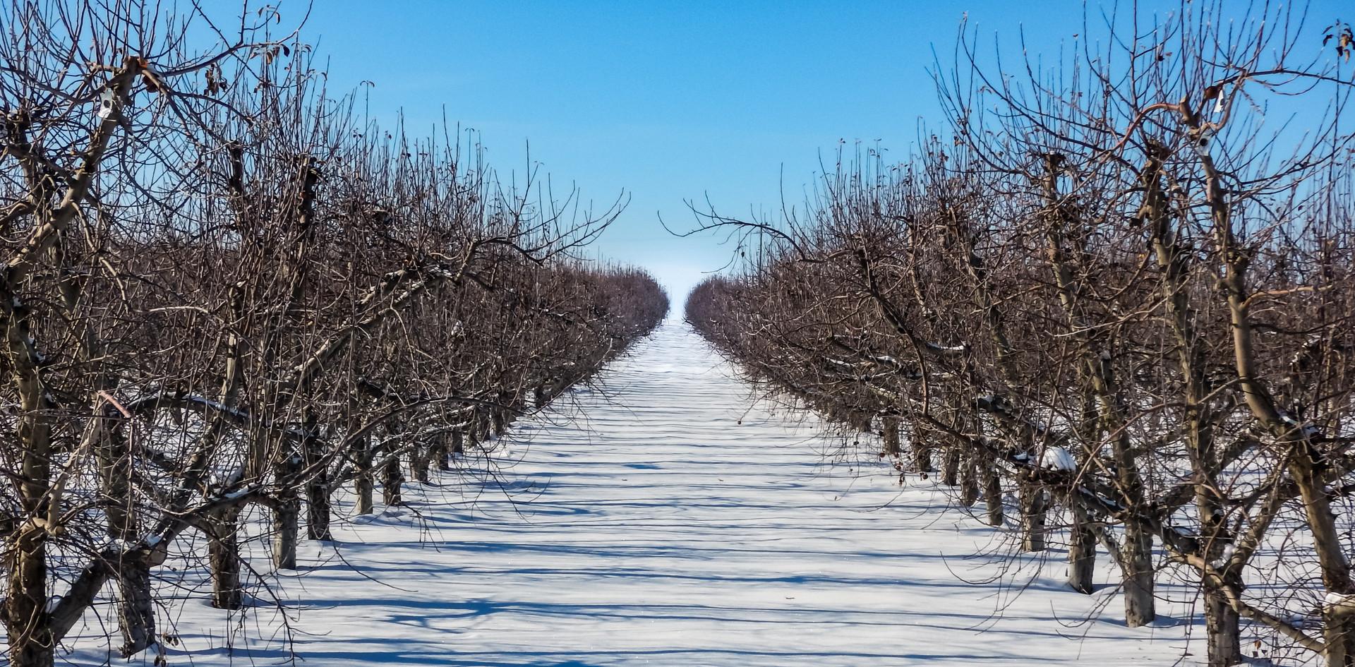 Winter Orchard.jpg