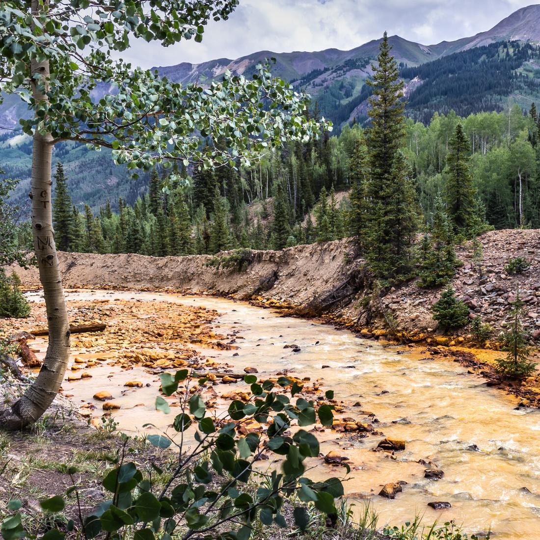 On Red Mountain Creek.jpg