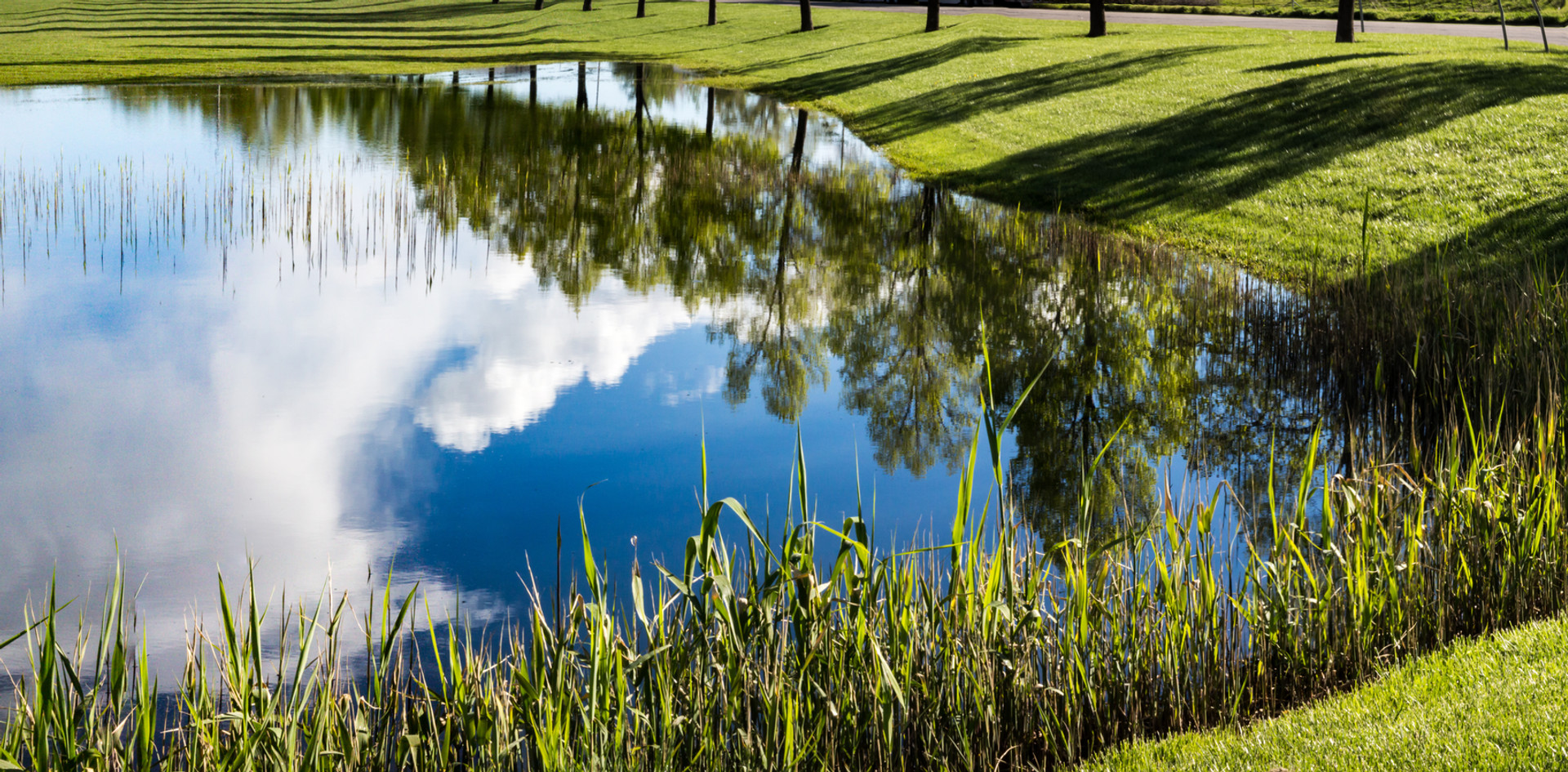 Reflection on Spring.jpg