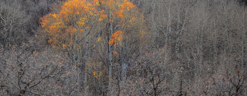 Firey Aspen-2.jpg