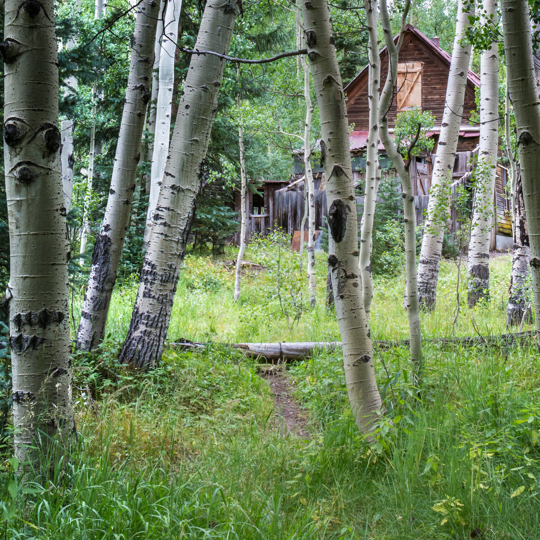 Ghost Town Forest Trail.jpg