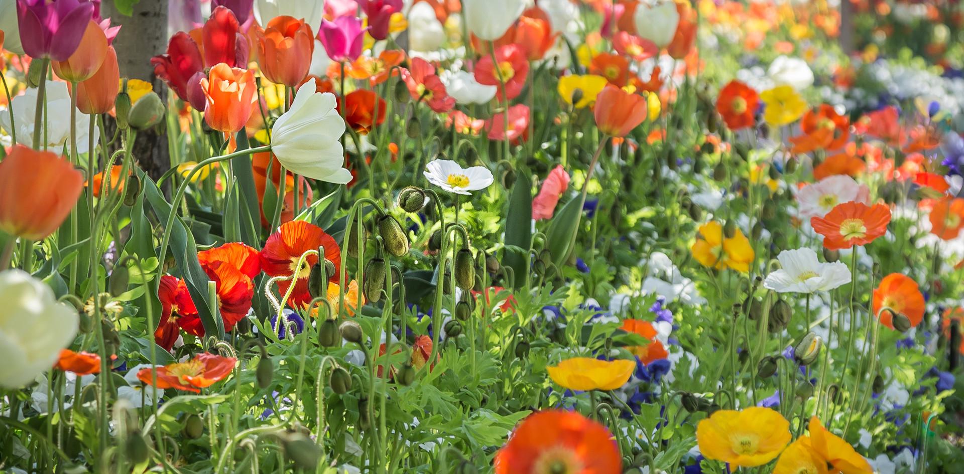 Colors of Spring-3.jpg