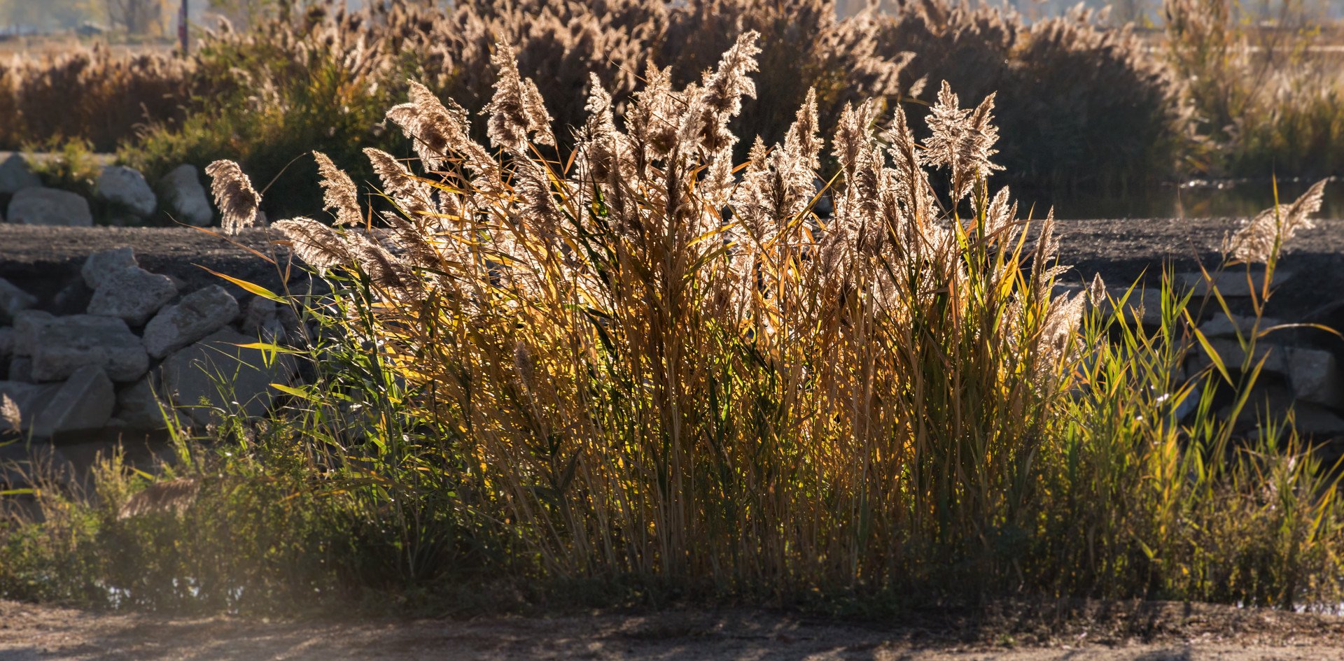Tuft of Grass-1.jpg