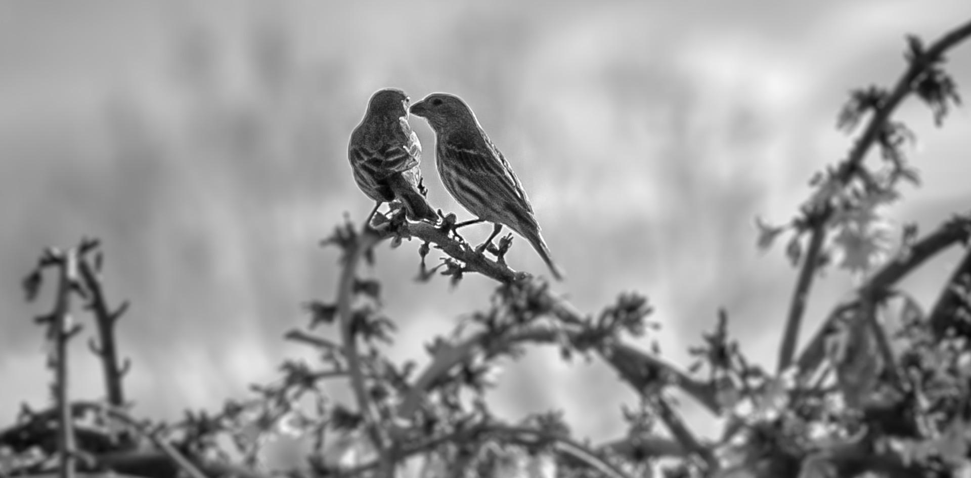 Love Birds-1.jpg