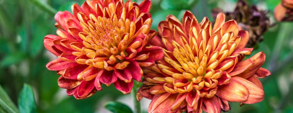 Flower Flower.jpg