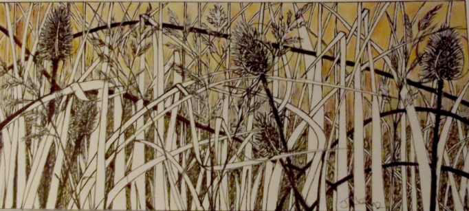 Tangled teasel ink and watercolour SOLD
