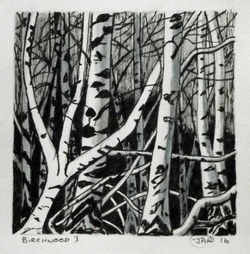 Birchwood 1 ink and waterclolour