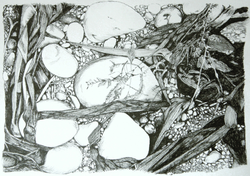Dorset Pebbles, ink drawing SOLD
