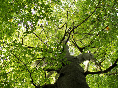 TIME TO JOIN IN NATIONAL TREE WEEK CELEBRATIONS IN PETERBOROUGH