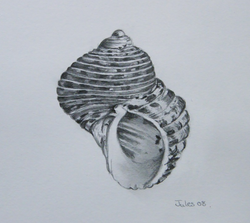 Shell, graphite drawing SOLD