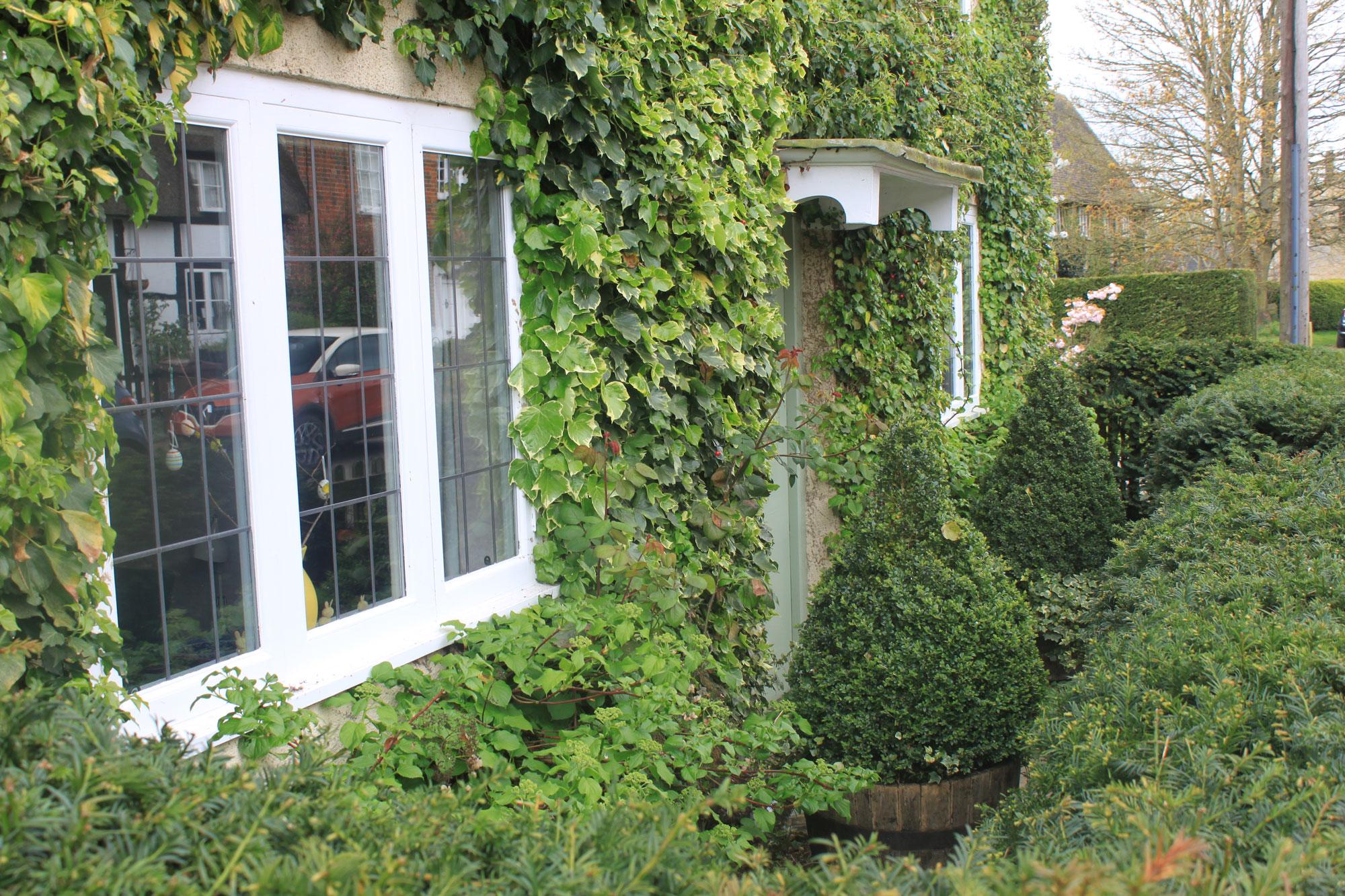 ivy-cottage-ivy