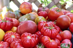 Tomatomania 2019 Returns to Descanso Gardens 3/29-31
