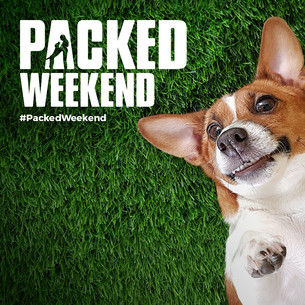 """Prime Video Unleashes """"Packed Weekend"""" To Celebrate Dogs Around The World!"""