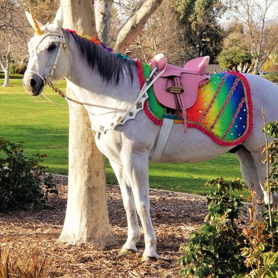 Milo the Unicorn Rainbow Unicorn Party P