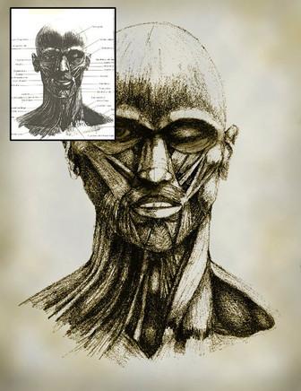 ANATOMY HEAD STUDY
