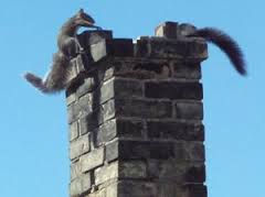 Animals in your Chimney