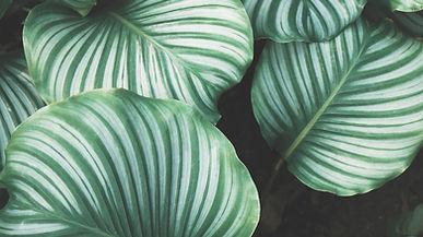 Serene botanicals