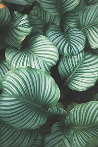 Yeşil yapraklar
