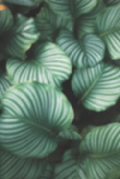 Grønne blader
