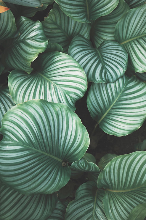 Grüne Blätter