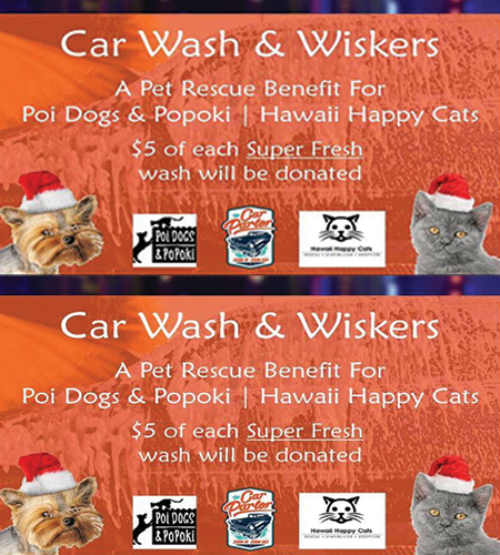 Car Wash & Whiskers