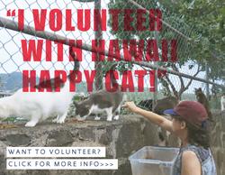 hawaiihappycats_volunteer