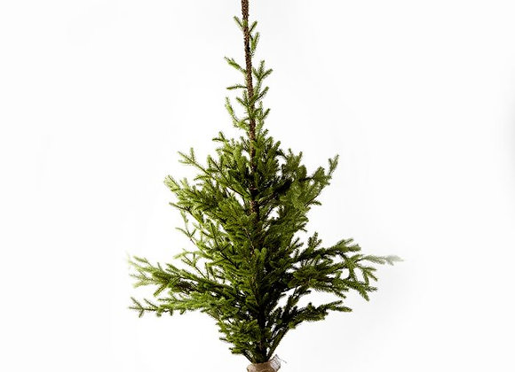 Alpine christmas Tree 130cm