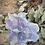 Thumbnail: Fluorite Dragon Head
