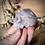 Thumbnail: 3 Small Skull Bundle Pack- Pack 4