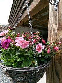 Hanging basket 2.jpg
