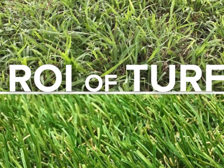 Turf, it's worth the investment