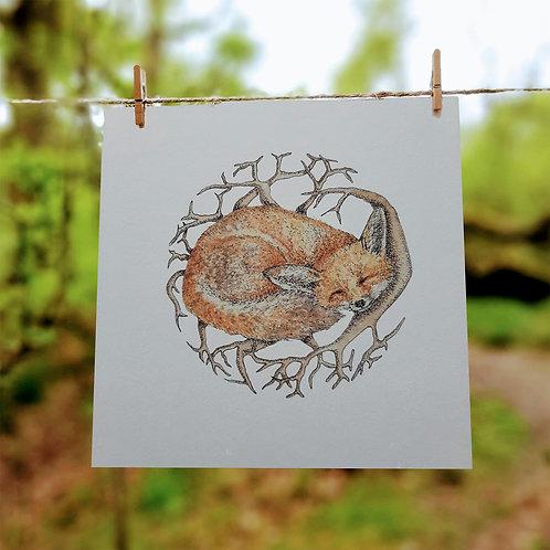 Sleeping Fox (Vulpes vulpes)