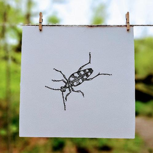 Four-banded Longhorn Beetle (Leptura quadrifasciata)