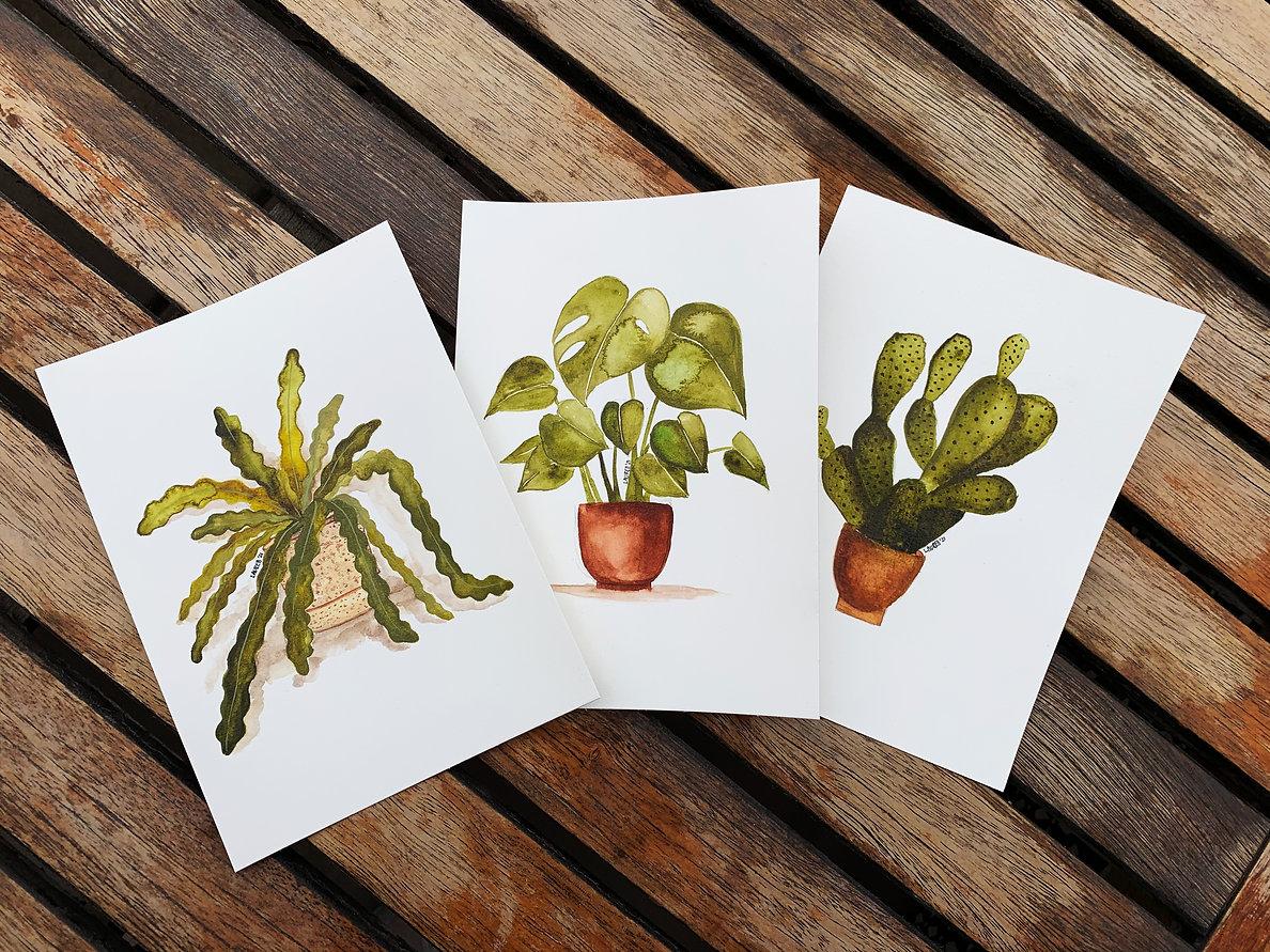 plant_trio_001.jpg
