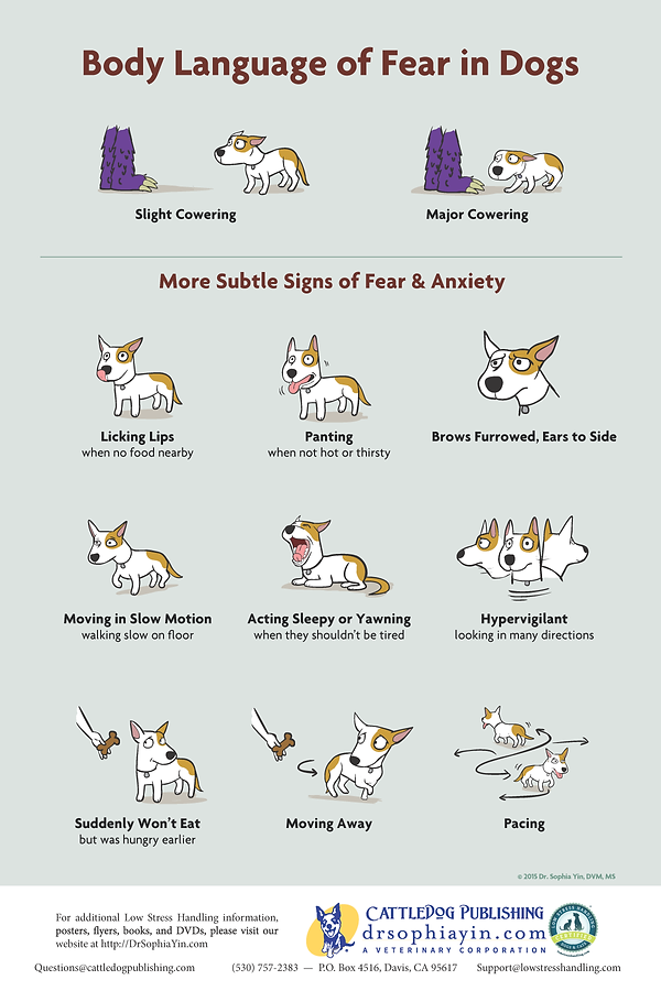 Body Language of Fear in Dogs - Poster.p