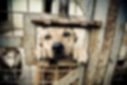 dogsincages.jpg