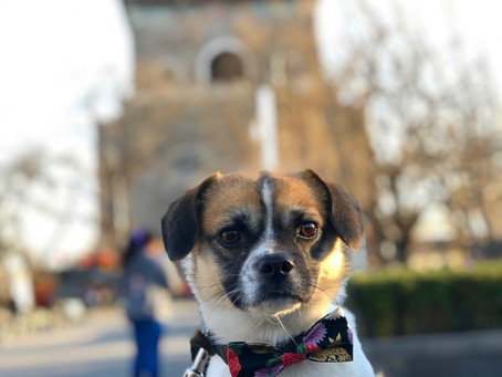 A Dog's Life in Beijing