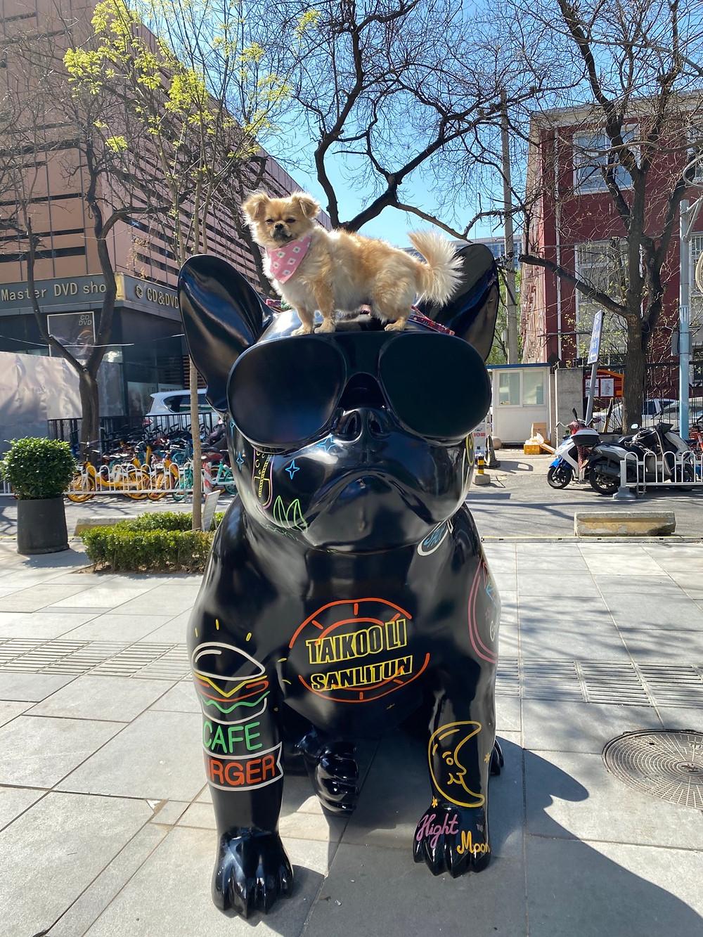 Dog on Taikooli statue