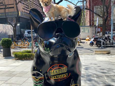 Dog Friendly Venues in Sanlitun, Beijing