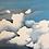 Thumbnail: Cumulonimbus