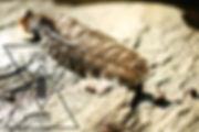 seb logo plume 2.jpg