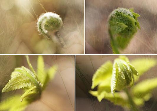 Naissance du printemps.jpg