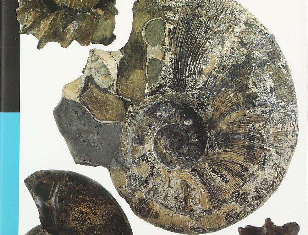 Japan Ammonites Kokuritsu Kagaku Hakubutsukan