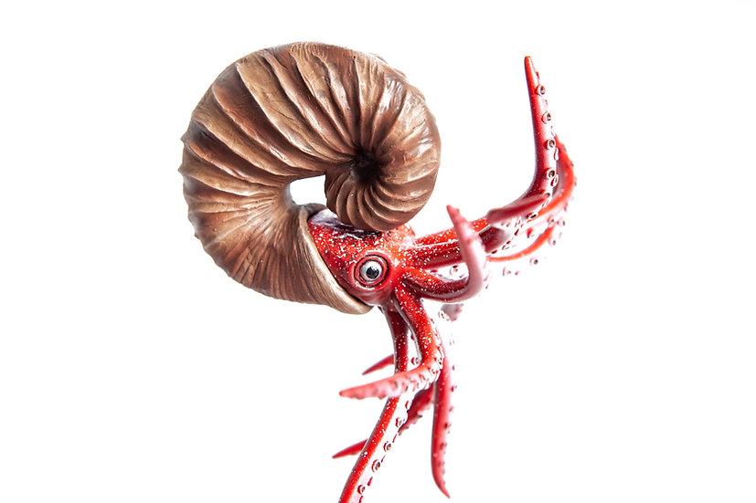 modelli in resina di ammonite museo scienza allestimento museale